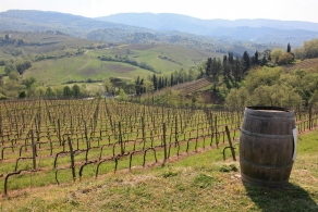 Selling vineyard in Chianti area Tuscany