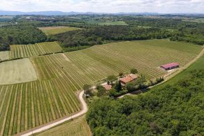 Winemaking business for sale in Umbria, LakeTrasimeno