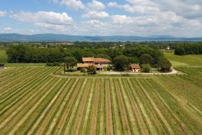 Winemaking business for sale between Umbria and Tuscany