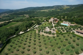 Selling farmhouse with vineyard and olive grove in Todi