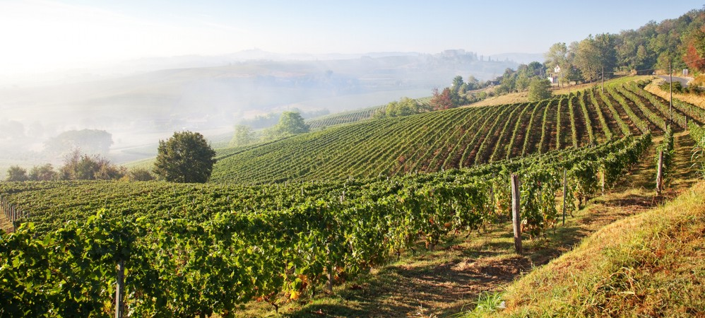 Vineries and vineyards property for sale Italy